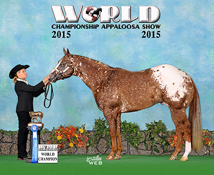 Bidding Closes Wednesday, May 17th, for May Internet Horse Auction