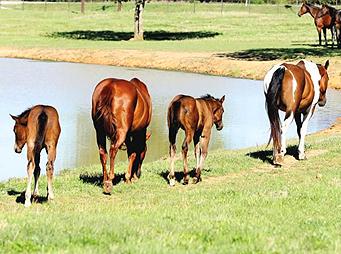 Weaning Foals Using the Farmers' Almanac