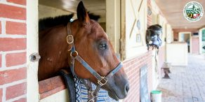 Equine Nutrient Management and Conservation Training