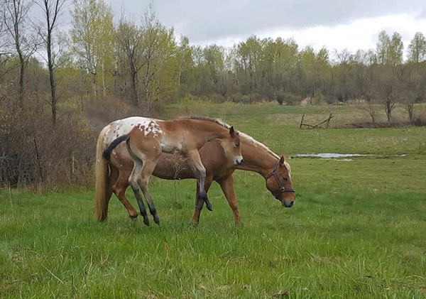 EC Foal Photo of the Day- Spring Into Summer!