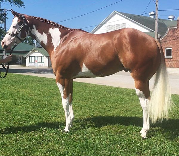 May Internet Horse Auction Closes May 2nd