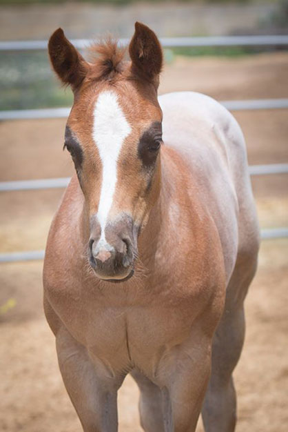 EC Foal Photo of the Day- What Color Will I Be?