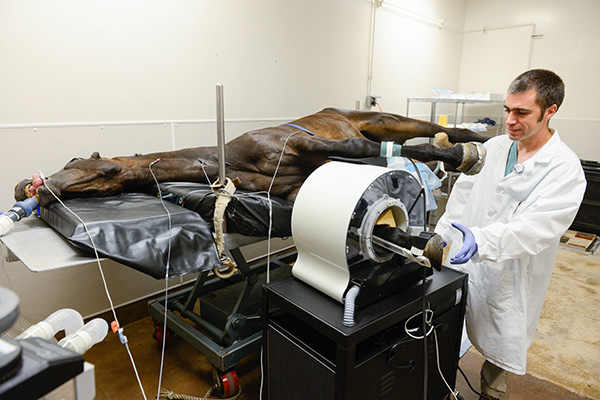 UC Davis PET Research to Improve Horse Safety and Welfare