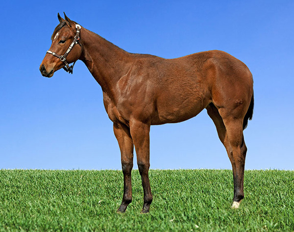 Bidding Closes May 15th For Performance and Halter Yearlings