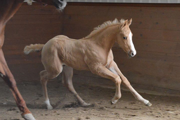 EC Foal Photo of the Day- Ready and Raring to Go!