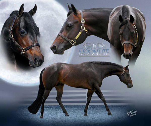 Decorated Stallion, Only In The Moonlite, Has Passed