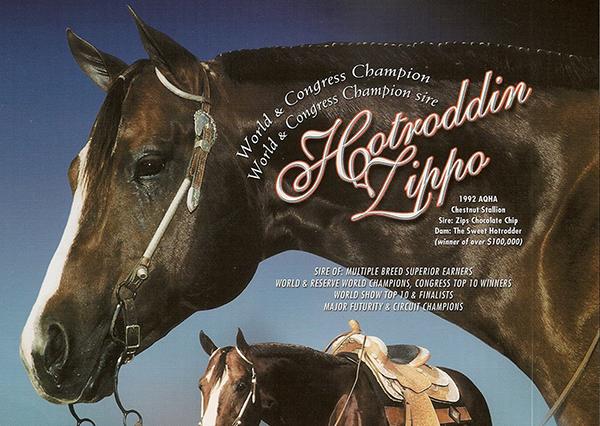 In Loving Memory of Hotroddin Zippo (1992-2019)