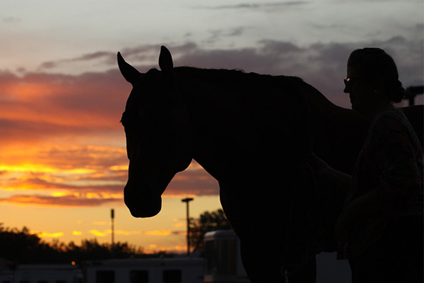 Positive Tests For Cannabis Products Will Result in AQHA Drug Violation