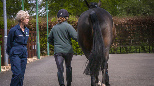 International Lameness Specialist Presents Online Educational Course
