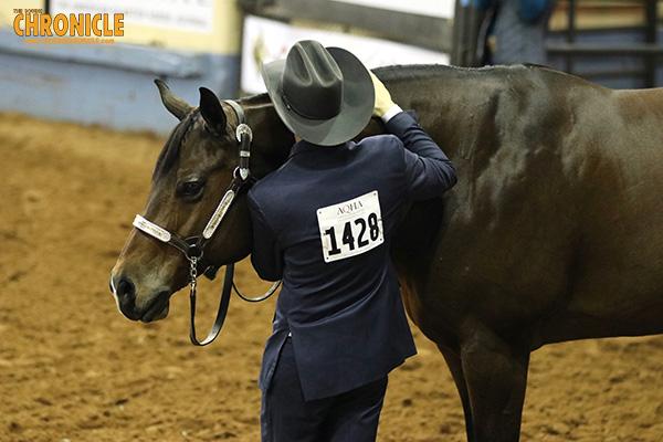 2019 AQHA World- Amateur Showmanship
