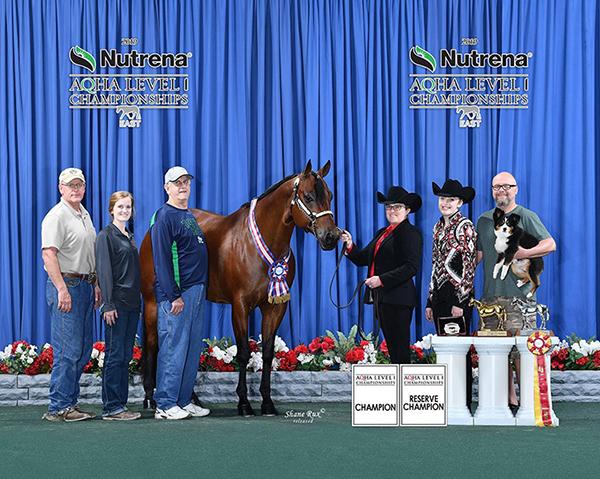 Dec. Internet Horse Auctions Close Dec. 3rd and 5th