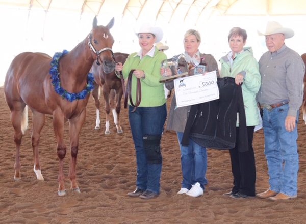 2020 Best In The West Halter Futurity Recap