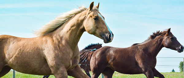 Update AQHA Member Account Information For 2020