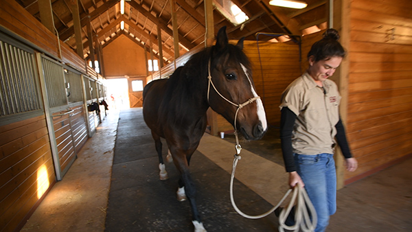 U.S. Border Patrol Horse With Longest Record of Active Service Has Retired