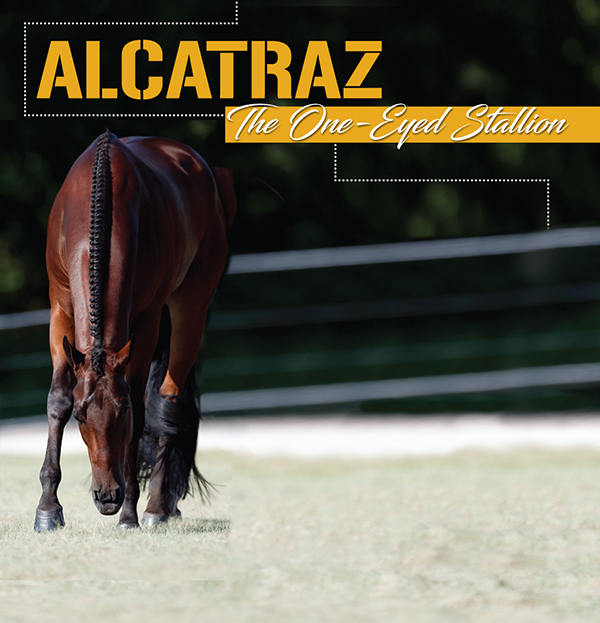 Alcatraz – The One-Eyed Stallion