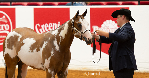 Platinum Breeders' Futurity Adds Yearling Division to 2020 APHA World Show