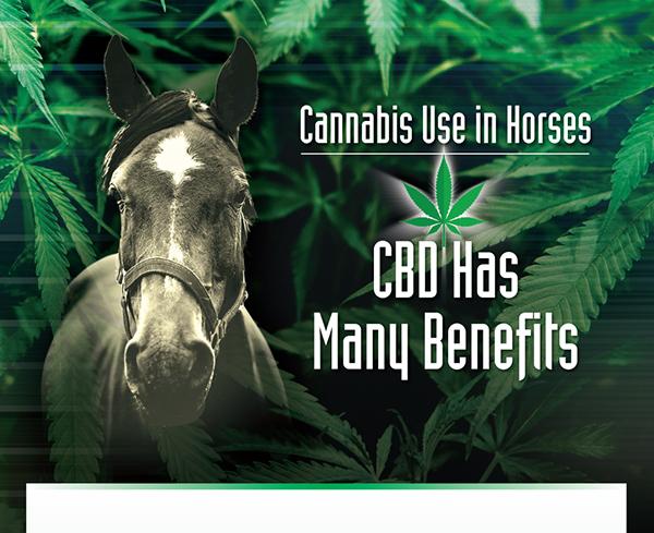 Cannabis Use in Horses – CBD Has Many Benefits