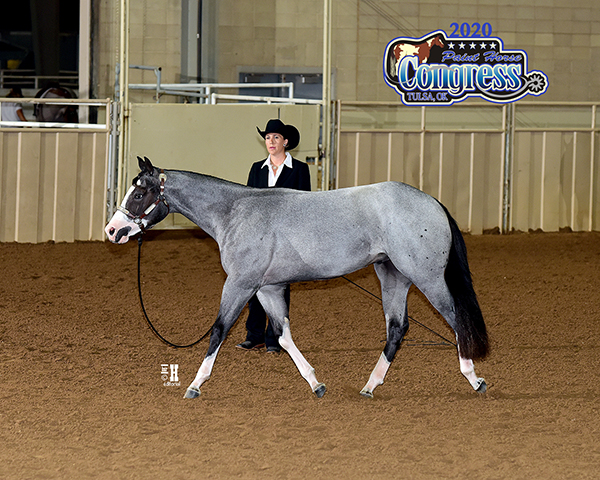 More Around the Ring Photos- 2020 Paint Horse Congress