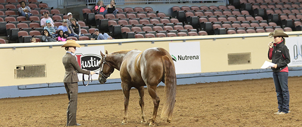 Donate to AQHA Professional Horsemen's Crisis Fund to Help Those in Need