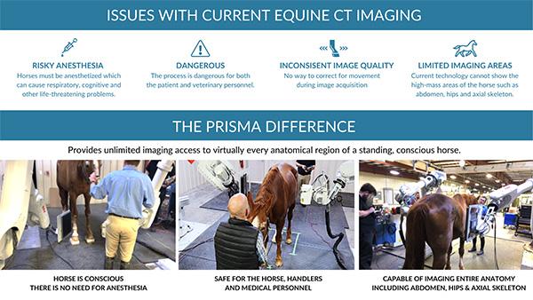 First-Ever Full-Body Equine Vet Imaging For Standing Conscious Horse