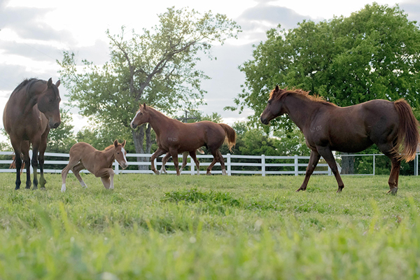 2021 AQHA Convention Moves Dates