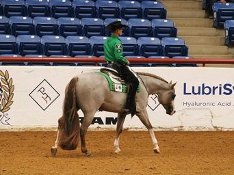 Carol Kane Purchases Multiple APHA World Champion, Kid In A Candy Store