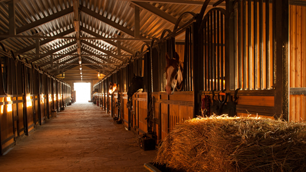 Six Tips For Ammonia Control in Horse Stalls