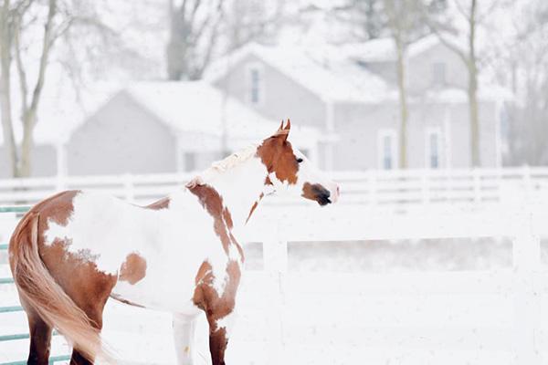 Snow Day Shenanigans!