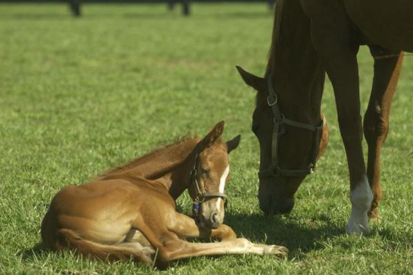 Industry Leaders Responding to Uptick in Foal Diarrhea Cases