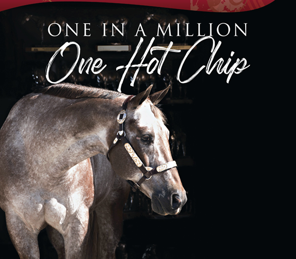 One In A Million – One Hot Chip