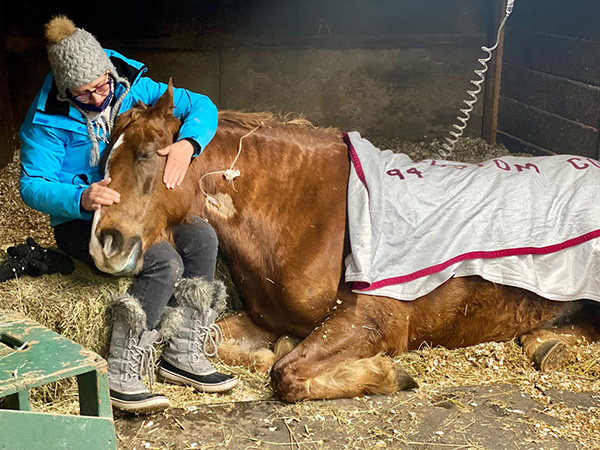 Haygain Helps Farm Hit Hard by EHV-1 Outbreak