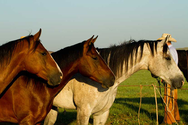 AQHA Bylaw and Registration Changes
