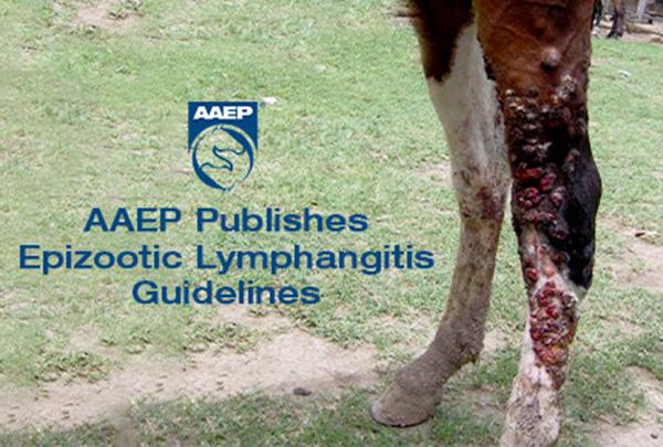 AAEP Publishes Epizootic Lymphangitis Guidelines
