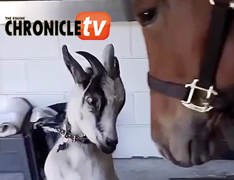 EC TV- Gaby the Goat