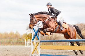Educational Equine Wellness Series