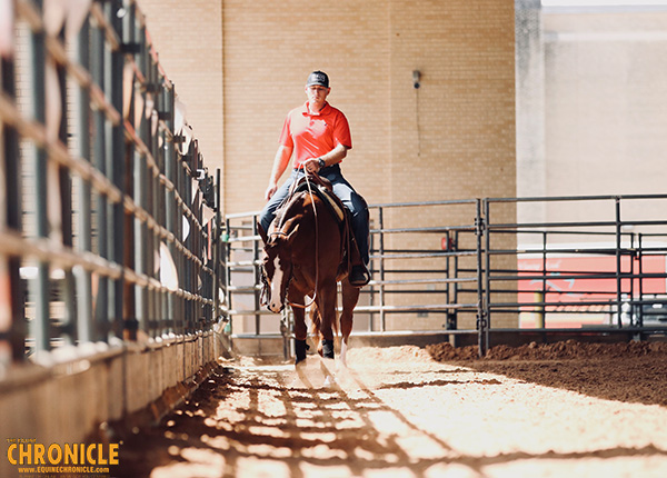 Training Young Horses- Science Behind the Benefits