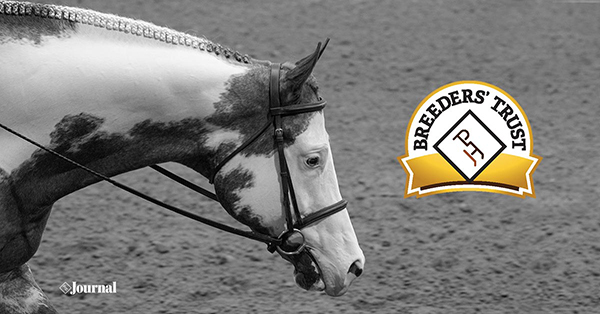Breeders' Trust Pleasure Stakes Modifications Announced For 2022 APHA World