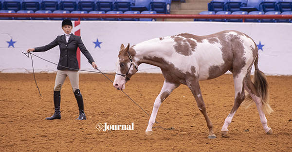 APHA- Early Implementation Show Rules Now In Effect