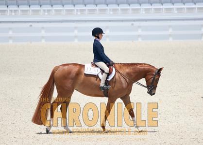 Entries Open For World Equestrian Center – OcalaNSBA Summer Horse Show Series