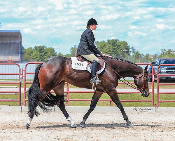 Shop Horses or Enter June Internet Auction