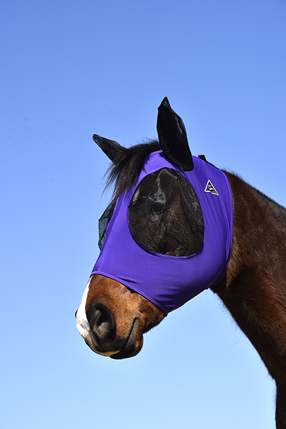 Fly Control Tips for Happy, Healthy Horses