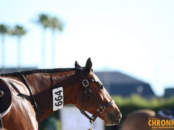 Revisiting Equine Vaccination Strategies- What's Best For the Horse?