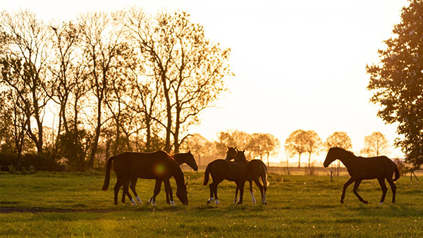 Equine Specialists Host EHM Webinar For Horse Owners