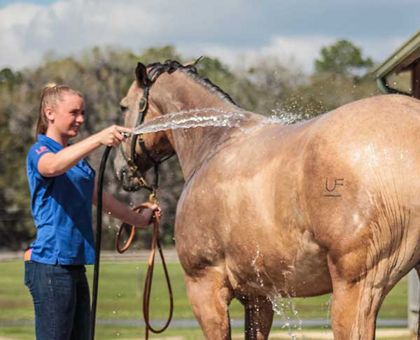 Scientists Discover Genetic Markers Tied to Loss of Ability to Sweat in Horses
