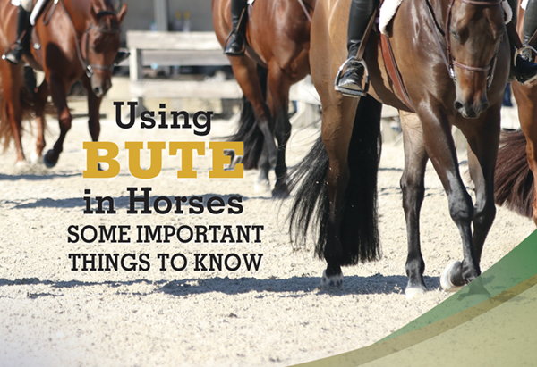 Using Bute in Horses – Some Important Things to Know