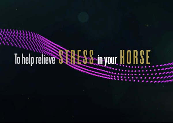 Musical Soundtrack to Help Calm Your Horse During Stressful Fourth of July Holiday