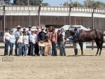 California Championship AQHA Show Breaks Records for Largest AQHA Show in California