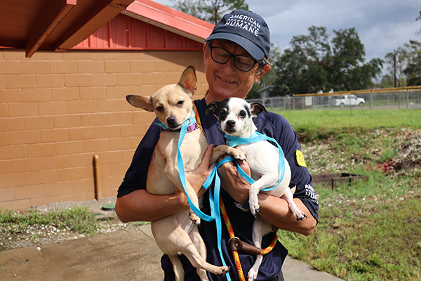 American Humane Rescue Team Cares for Hundreds of Displaced Animals in Louisiana Following Hurricane Ida