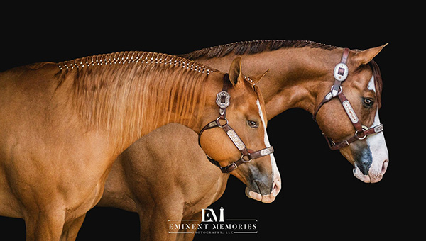 EC Photo of the Day- Behind Every Good Horse