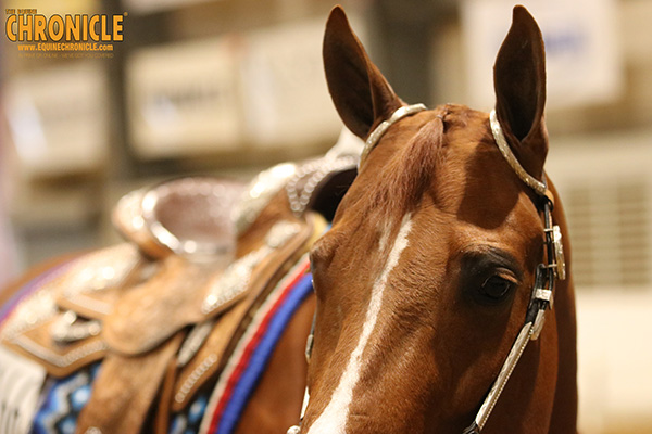 Is Your Horse Stressed?